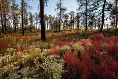 IMG_5995-1_luminous70 (bubba911t) Tags: autumn fall colorado autumncolors canon6d coloradoautumn coloradofall