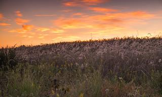 Sunrise Behind the Prairie Grass