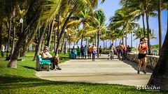 Miami South Beach (B. Weihe Photography) Tags: ocean b vacation usa sun holiday beach weather sport strand canon bench palms photography eos drive florida miami south urlaub benjamin jogging sonne freizeit wetter beachwalk palmen joggen weihe strandweg 700d