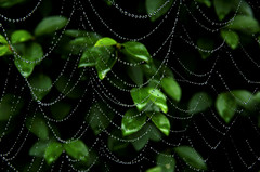 spider's web in drizzle (groenling) Tags: autumn fall spider web cobweb drizzle