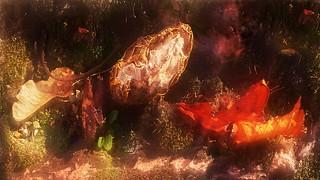 Apples of Paradise, autumn on the wall of Fools` Tower - Paradiesäpfel, Aktion September auf der Narrenturm Ziegel-Mauer Moos - Hommage a Friedemann der Teppichweber