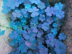 Blue (Sergio Bentez.) Tags: blue azul plantas treboles