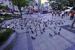 Pigeons (Time Sprit ()) Tags: nikon pigeons seoul d3  afsnikkor1735mmf28difed