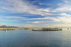 Trip over to Lochboisdale net washing (leanish) Tags: sunrise dawn day hebridies sweetcaroline isleofbarra lochboisdale salmonfarming hellisay marineharvest westernisle marineharvestwork pwpartlycloudy