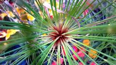 Stems (hobbyphoto18) Tags: plant france nature plante stem nordpasdecalais tige