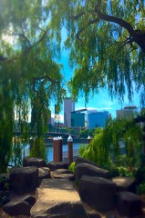 City and Weeping Willows (TMimages PDX) Tags: city trees sky urban usa building skyline oregon river portland geotagged photography photo downtown cityscape unitedstates image scenic explore photograph pacificnorthwest willametteriver fineartphotography publicspaces flickrexplore explored iphoneography eastespalade sckyscrper