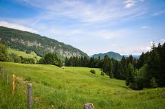 Allgu (Manu Kllr) Tags: trees mountains alps tree landscape htte wiese himmel hills berge gras alpen zaun landschaft wald bume fichten tannen allgu hgel