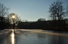 Setting sun (-Kj.) Tags: kasteeldehaar dehaarcastle park winter afternoon cold walk lowsun lake