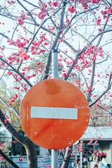 _DSC8881 (*嘟嘟嘟*) Tags: 台中 泰安 山櫻花 櫻花 警察局 taiwan