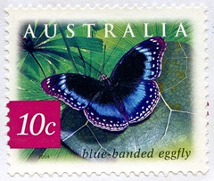 "beautiful stamp Australia 10c Blue-banded Eggfly (Hypolimnas alimena) postzegel Australië postes timbre Australie γραμματόσημα Αυστραλία bélyeg Ausztrália 切手 オーストラリア почтовые марки Австралия perangko Australia 55c frimärke frimærker frimärken 邮票 澳大利亚 Aust (stampolina, thx for sending stamps! :)) Tags: ออสเตรเลีย 오스트 레일 리아"" استراليا 澳大利亚 ऑस्ट्रेलिया avustralya stamps stamp 切手 briefmarke briefmarken スタンプ postzegel zegel zegels марки टिकटों แสตมป์ znaczki 우표 frimærker frimärken frimerker 邮票 طوابع bollo francobollo francobolli bolli postes timbres sello sellos selo selos razítka γραμματόσημα bélyegek markica antspaudai маркица pulları tem perangko timbru postapulu pulu timbresposte australien australia bluebandedeggfly hypolimnasalimena butterfly papillon schmetterling lepkék azzur azul azzurro 兰色 голубой falter biru bleue mavi blu blå animal insect"