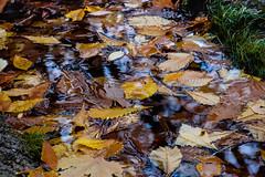 Hojas (JC Arranz) Tags: water españa amarillo naturaleza agua hojas paisaje zaragoza ocres calatayud charco nuévalos monasteriodepiedra nikond3200