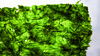 Wasabi Seaweed Snack (fovphotos.com) Tags: panasonic lumix dmclx7