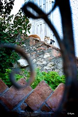 Kitty (Kym.) Tags: andalucía andalusia cat kitty nerja otherpeoplesgang spain