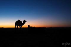 Coucher de soleil dans le dsert (Au Coeur Des Peuples) Tags: sahara dunes sable maroc dsert dromadaire mhare
