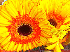 Joe's Flowers (EDWW day_dae (esteemedhelga)) Tags: flowers plants nature beauty season botanical flora colorful natural blossom cluster nursery parks natura creation passion vegetation bloom greenery bouquet annual bud botany decor horticulture rosette sprout seedling biennial perennial posy specialoccasion floret efflorescence floralarrangements juncture siring edww mothernature daydae esteemedhelga joesflowers floeret greatmother damenature