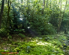 GSMNP Backpack Day 5 - June 27, 2014 - Eagle Creek Campsite #96 (mikerhicks) Tags: usa geotagged unitedstates hiking northcarolina backpacking proctor greatsmokymountainsnationalpark gsmnp eaglecreektrail fontanadam fontanavillage canon7d sigma18250mmf3563dcmacrooshsm campsite96 geo:lat=3550602020 geo:lon=8376025915