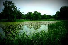 Next to the Pond (eskayfoto (aka Nomis.)) Tags: park water pool lumix hall pond cheshire panasonic nationaltrust dunham dunhammassey lomoish ribbet massey lx3