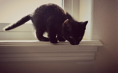 J'aime mon chaton... (Luv Duck - Thanks for 15M Views!) Tags: pets cat blackcat kitten kitty kitton rescuedcat