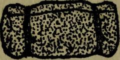 Anglų lietuvių žodynas. Žodis writing-pad reiškia n laiškų bloknotas lietuviškai.