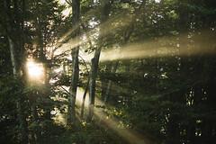 Sun & Forest II (AlyssaEvergreen) Tags: morning trees sunshine fog westvirginia sunrays locusttree pocahontascounty