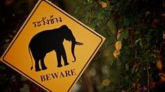 Regarder bien de chaques côtés avant de traverser - Version 2 (Arkinien) Tags: sign forest thailand evening asia tropical signpost thaielephantconservationcenter elephantconservation