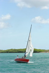 DSC_6024 (eric15) Tags: beach race cat surf sailing wind offshore competition surfing racing aruba international catamaran sail windsurfing regatta optimist sunfish 2014