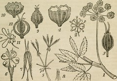 Anglų lietuvių žodynas. Žodis carpophore reiškia karpoforius lietuviškai.
