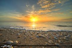 Seashells on Beach Singer Island Florida (Captain Kimo) Tags: seashells sunrise florida coconuttree singerisland lifeguardtower palmbeachcounty beachchair rivierabeach hdrphotography