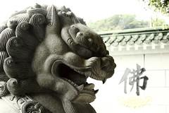 石獅stone lion_6267
