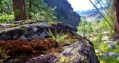 Miniature Landscape (Kelly.Belle1) Tags: landscape miniature dof depthoffield idaho tiny salmonriver autofocus infinitexposure