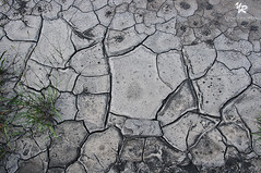 Cracked soil, French Alps - FRANCE (Yannick-R) Tags: france alps nature alpes french soil yannick franaise rivoire crackedsoil frenchalpsfrance