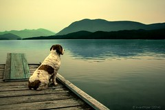 A Last Gaze (evanffitzer) Tags: dog lake mountains water photography dock photographer horseflylake canoneos60d evanffitzer evanfitzer