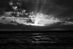 what is heaven? (ijarosek) Tags: film 35mm pentacon ilford fp4 praktica tl5b prakticatl5b