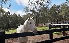 255 Dungog Road, Martins Creek NSW