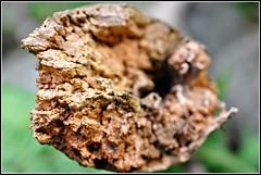 estremita (La_ura_) Tags: wood macro nikon holz bois legno d90 estremit laurabraga