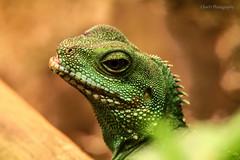 IMG_8578 () Tags: zoo taiwan 150 600 tamron