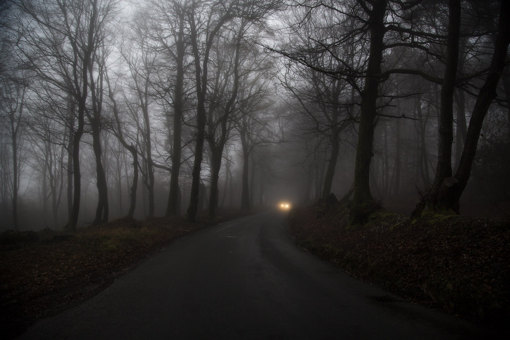 Image result for headlights in the woods