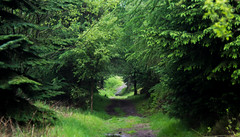 Moel Fama Pathway (karf101) Tags: wood trees light tree green forest woods path tunnel paths pathway
