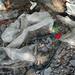 Trash on Pulau Ubin: Large unmarked plastic bags