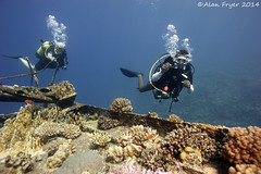 Tiger and David (Alan Fryer) Tags: redsea wideangle wrecks underwaterphotography emperordivers chrisoulak nikond700