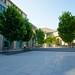 Trees at Haas School of Business: Berkeley, California 2014