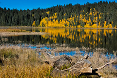 On the Grand Mesa (David Lee Short) Tags: colorado fallcolor davidleeshort