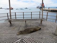 Galapagos - San Cristobal-84