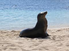 Galapagos - San Cristobal-188
