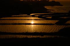 26Rice Field of Sodeshi (anglo10) Tags: sunset japan kyoto seashore