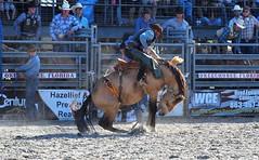 P3110215 (David W. Burrows) Tags: cowboys cowgirls horses cattle bullriding saddlebronc cowboy boots ranch florida ranching children girls boys hats clown bullfighters bullfighting