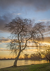 """Willow Tree in Winter • <a style=""""font-size:0.8em;"""" href=""""http://www.flickr.com/photos/141572193@N06/32716873280/"""" target=""""_blank"""">View on Flickr</a>"""