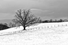 Snow Tree (APGougePhotography) Tags: boone nc north northcarolina carolina mountains snow blackandwhite bw black white topaz nikon nikond800 d800 detail denoise topazlabs nik silverefexpro