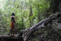 The embera man and the tree trunk (Panamá) (Casa de América) Tags: panamá árbol arte caído indígenaemberá fotografía indian indios purú tronco fallentree trunk selva bosque forest jungle rainforest human humano paisaje landscape pensando thinking meditando meditate víctorsantamaría panama emberaindigenous emberá embera pa arteenlared casamerica casadeamérica casaamérica madrid