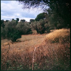 A walk on the countryside (davidgarciadorado) Tags: 120film diapositive velvia rolleiflex planar lagarriga mediterranean forest is art ithinkthisisart
